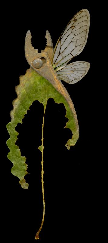 Pseudomorphs: Specimen 4