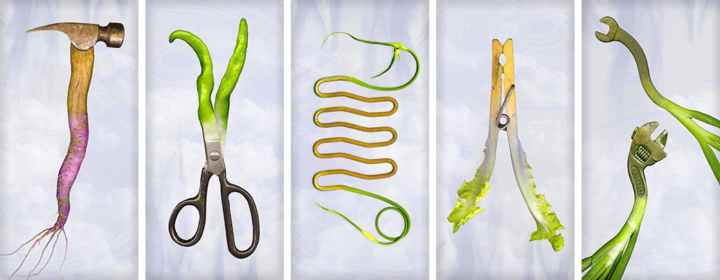 Left to Right: Hammer & Turnip; Scissors & Peppers; Masher & Garlic Scapes; Clothespin & Escarole; Wrenches & Onions