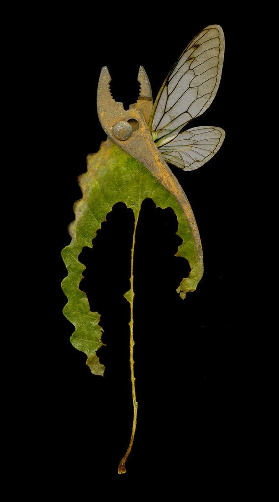 Pseudomorphs: Specimen #4